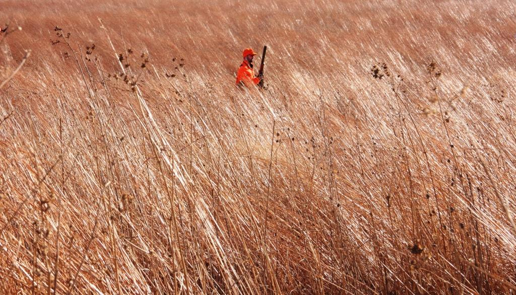 State Wildlife Management Areas, like this Iowa tract, are areas specifically managed for producing upland birds and other wildlife.