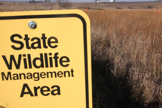 State Wildlife Management Areas are prized by upland conservationists for their permanently conserved habitat and public access.