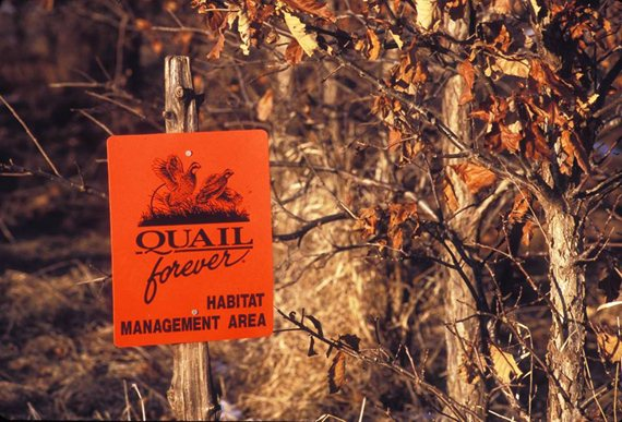 Quail Forever is working hard for the future of upland conservation and upland hunting.
