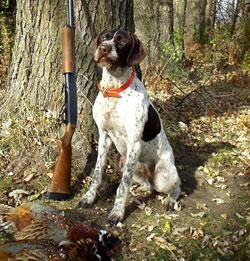 Quail Hunting Dog Breeds