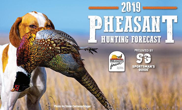 Michigan Pheasant Hunting Forecast 2019