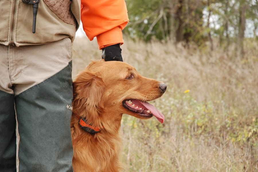 Bird Dog Profile