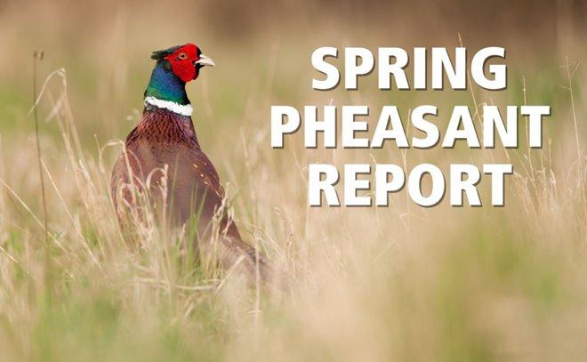 Spring 2018 Pheasant Report