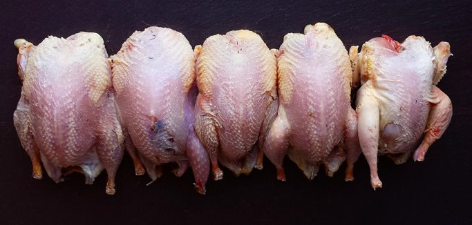 An example of four dry plucked birds and one wet plucked bird