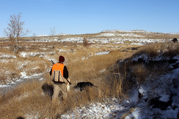 Pheasant hunting tip - follow the dog