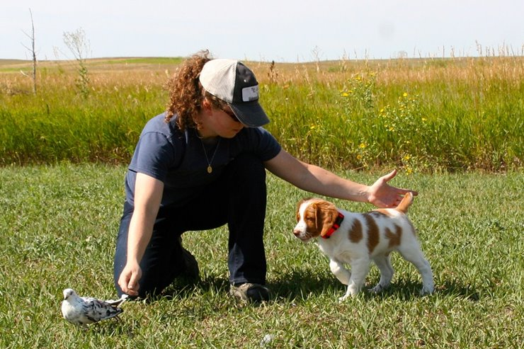 A Bird Dog Training Plan