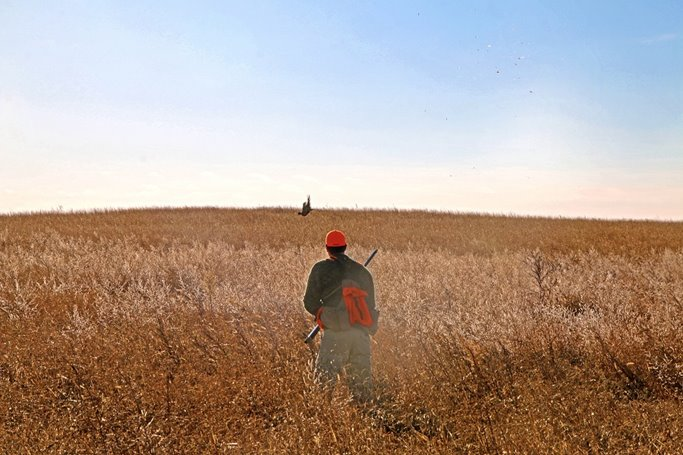 Pheasant hunting tip - stop mid-field