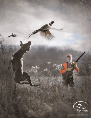Pheasants Forever Quail Is Proud To Announce SportDOG BrandR As A Renewing National Sponsor And The Official Electronic Collar Of