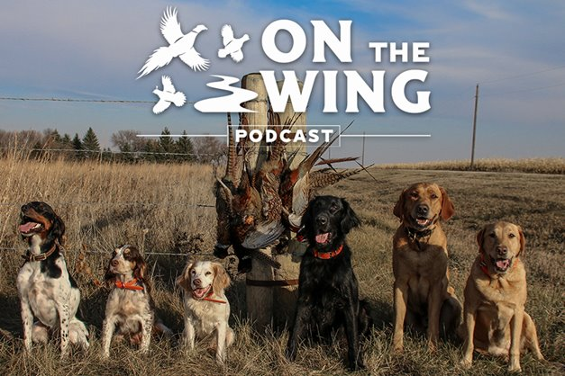 983d662fc0 Podcast  Rooster Road Trip S.D. Day  5 and Week Wrap