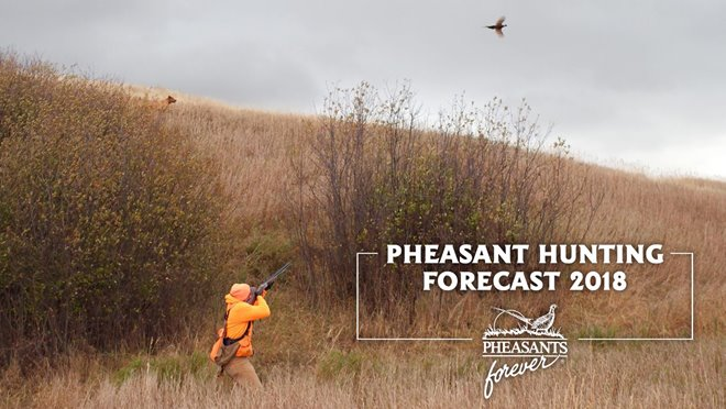 Pennsylvania Pheasant Hunting Forecast 2018