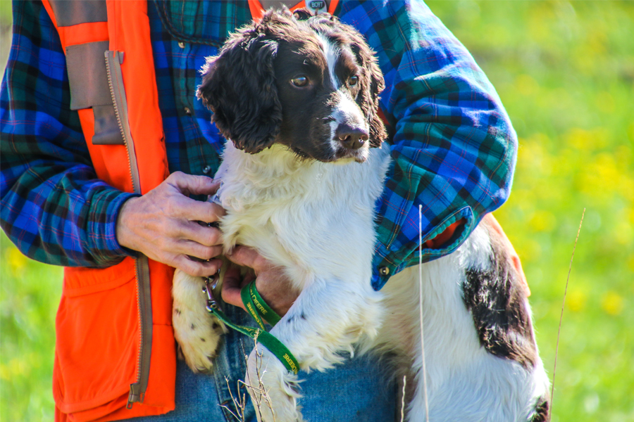 Bird Dogs: The Spaniel Breakdown