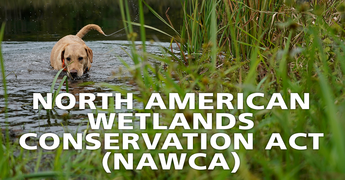 North American Wetlands Conservation Act