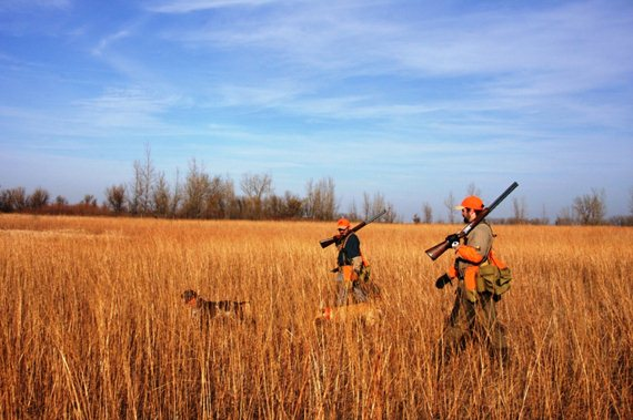 Keying in on quality upland habitat helps increase the chances of productive pheasant hunts.