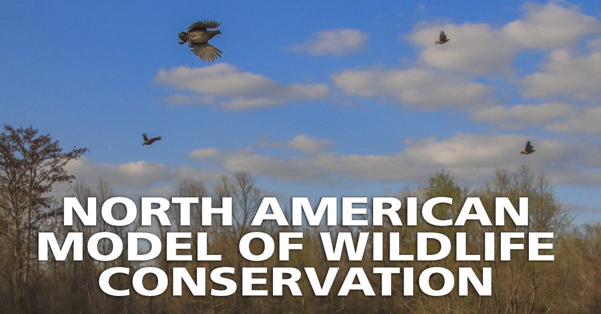 North American Model of Conservation Wildlife