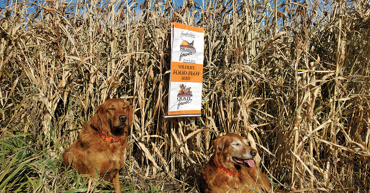 Sorghum Goldens by Ainars Silis – Blizzard Buster – MN