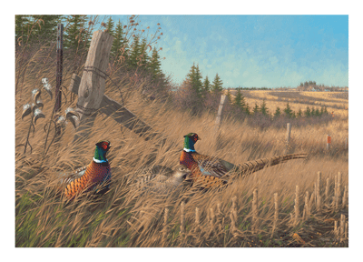 2015-2016 Shelterbelt Pheasants