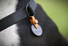 Freeze Tag Pet Tag Holder-Orange