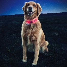 NiteDawg LED Dog Collar