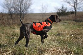 Sylmar Dog Body Guard Vest
