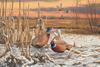 2018-2019 Daybreak-Pheasants